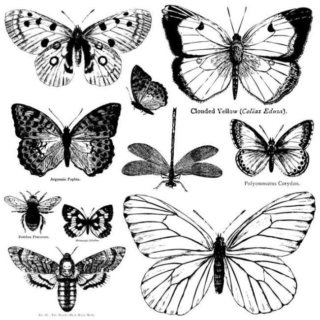 Ștampile decorative fluturi