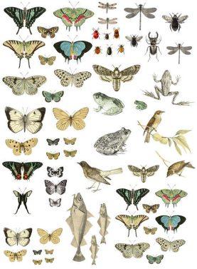 Transfer decorativ cu insecte